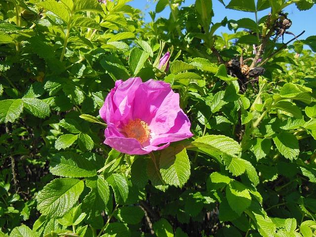 rozkvetlý květ